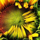 Fibonacci Fabulous